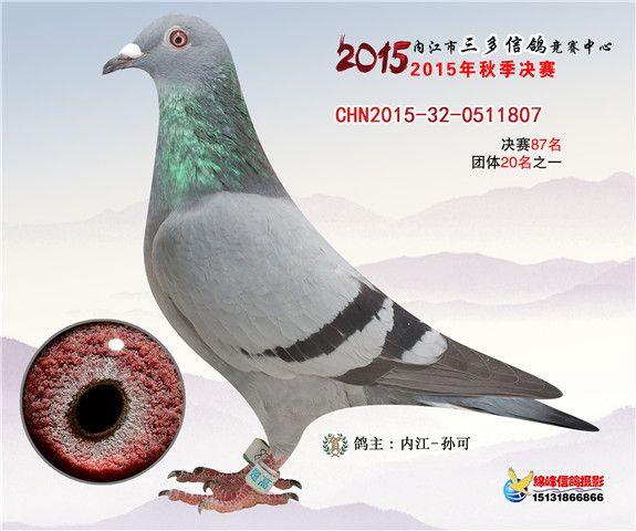 内江市三多信鸽竞赛中心相册 中国信鸽信息网各地公棚