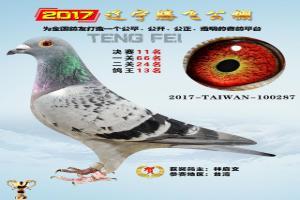 辽宁腾飞公棚2017年获奖鸽