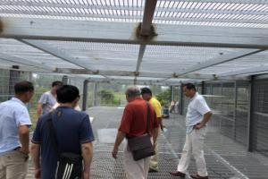 宏飞国际赛鸽中心公棚面貌